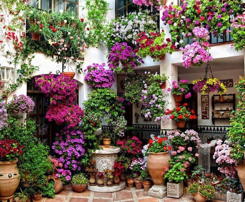 Flowerplant