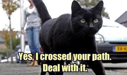 Black_cat_cross_your_path